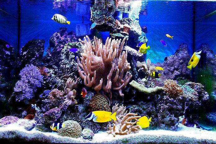 Jak założyć własne akwarium?