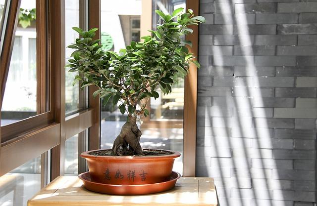 Sprzedaż i kupno bonsai - powiew orientu w twoim domu