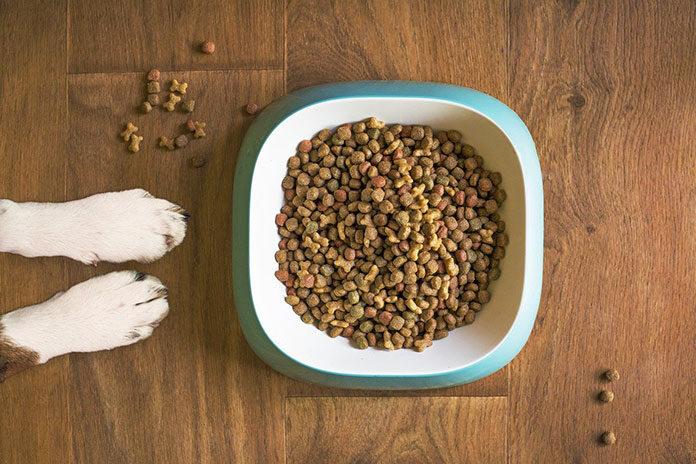 Miski dla psów